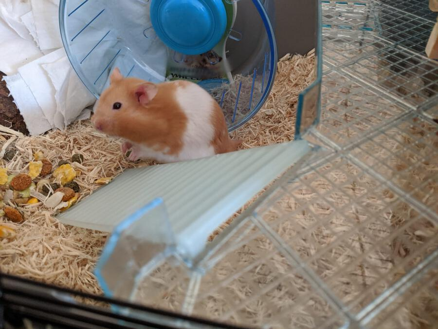 Richmond Hamster In Cage